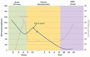 An Illustration Of The Different Stages Of Hiv Infection