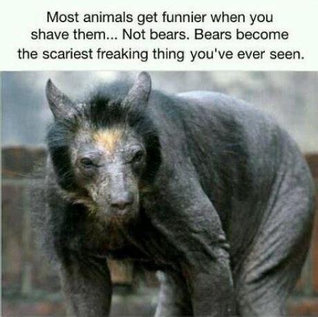 Hairless Bear Meme - 301 moved permanently