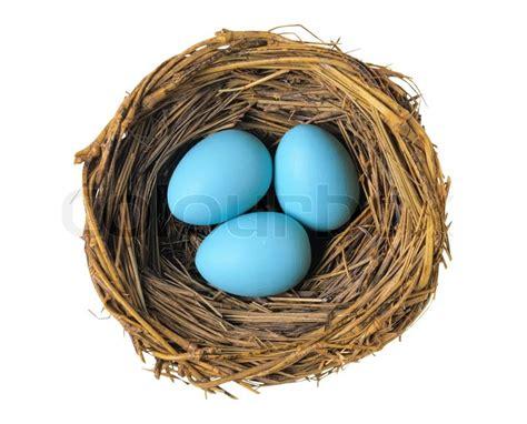 gruppe der blaue eier  vogelnest isoliert auf weiss stock