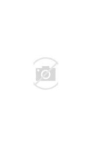 Types of Lavender Plants Varieties