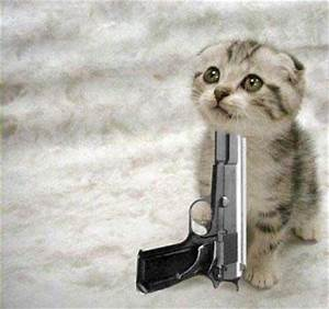 All Wallpapers: Funny Cats With Guns Wallpapers