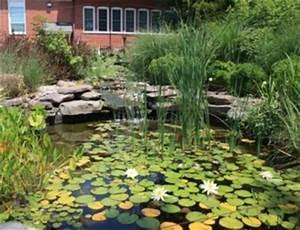 Plantes Vivaces Autour D Un Bassin : bassin b ton tout ~ Melissatoandfro.com Idées de Décoration