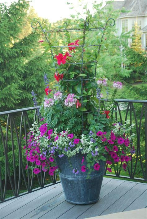 container gardening deborah silver betty s gardens