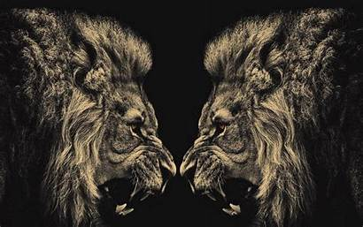 Lion Screensaver Animal Wallpapers Lions Backgrounds Walldiskpaper