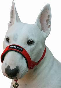 dogs my halter collar medium chewy