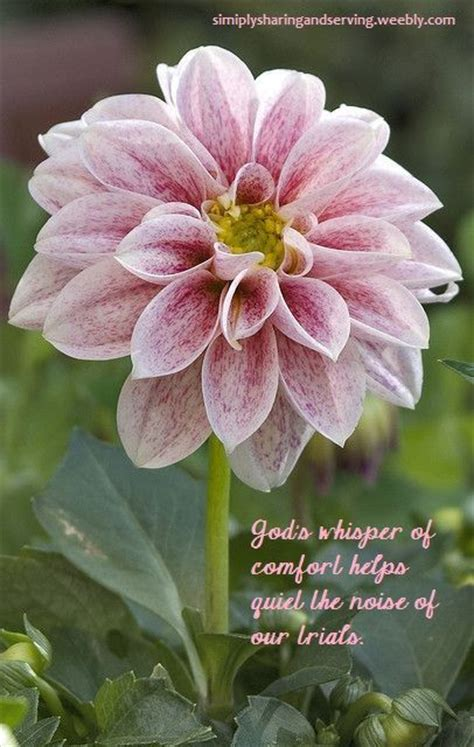 Of The Gods Flowers by 4072 Best Flowers Verses Images By Jo Wilmer Be