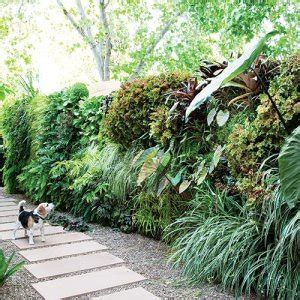 wall plants for shade green wall types to enhance your garden grotec landscape solutions