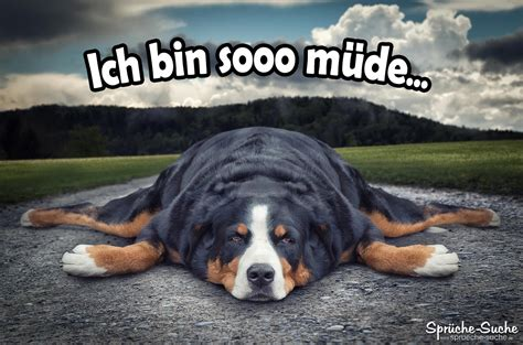 Ich Bin Müde Spruch Mit Hund Sprüchesuche