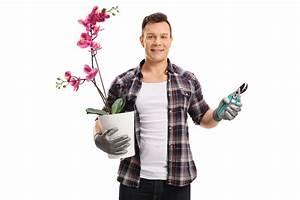 Orchideen Klebrige Blätter : immer auf das schneidwerkzeug achten ~ Whattoseeinmadrid.com Haus und Dekorationen