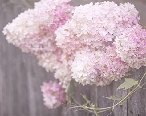 Buy top selling products like icanvas hydrangea blues canvas wall art and masterpiece art gallery hydrangea arrangement soft. Amazon.com: Lovely Hydrangea Print, Rustic Wall Art, Pink ...