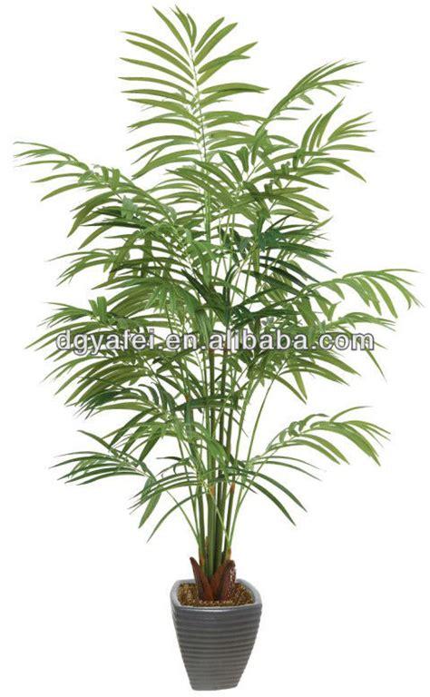 Fausse Plante Exterieur Fausse Plante Verte Photos De Magnolisafleur