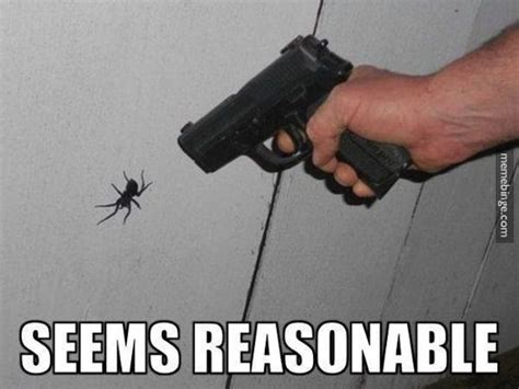 Killing Spiders Meme - 25 best ideas about spider meme on pinterest funny friend memes scared meme and spider humor