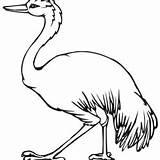 Emu Coloring Printable Getdrawings Getcolorings sketch template