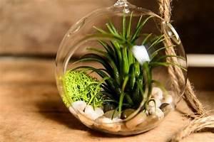 Terrarium Für Pflanzen : pflanzen terrarium selber machen schritt f r schritt anleitung ~ Frokenaadalensverden.com Haus und Dekorationen