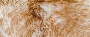 Animal, Fur, Png, Transparent, Animal, Fur, Png, Images