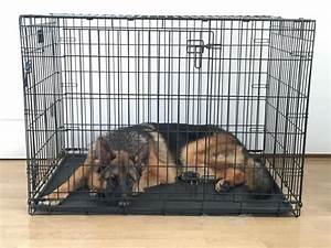 Dog crates for german shepherds goldenacresdogscom for Dog crate size for german shepherd