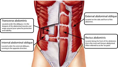 Muscles Of The Pelvic Floor Quiz by Plank Your Way To Better Abs With These 5 Variations