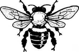 Queen Honey Bee Coloring Page