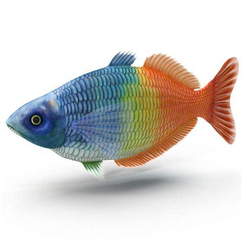 Real Tropical Fish