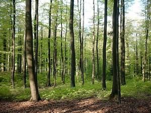 Wald in Deutschland � Wikipedia
