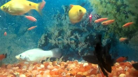 home aquarium fish tank   types  fish youtube