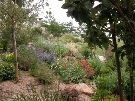 xeriscape trees convert your turf xeriscaping gardens flower beds pinterest
