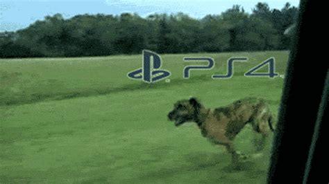 jumping dog gif xbox   meme