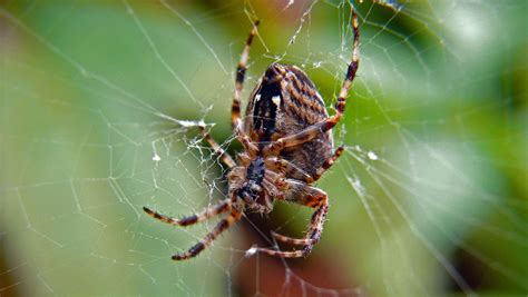 Why Don't Spiders Get Stuck In Their Webs?