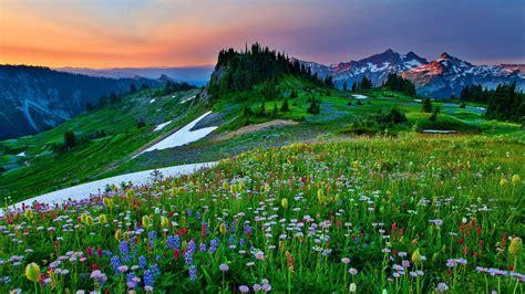 field  mountain flowers sky grass lovely ultra