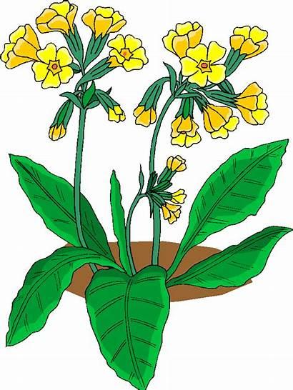 Clipart Flowers Clip Flower Cliparts Plants Yellow