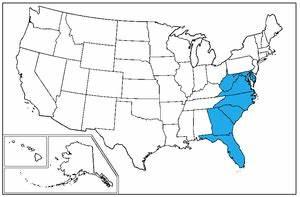 South Atlantic states - Wikipedia