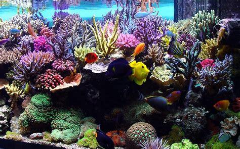fond d ecran aquarium magnifique