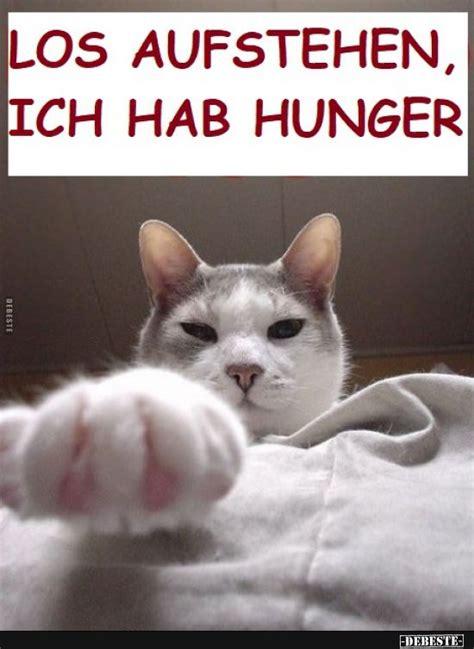 los aufstehen ich hab hunger witzige katzenfotos