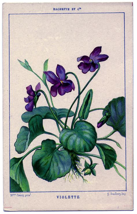 floral graphic french violets  graphics fairy
