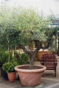 les 25 meilleures idees de la categorie olivier en pot sur With superior amenagement jardin exterieur mediterraneen 1 plantes et amenagement jardin mediterraneen 79 idees
