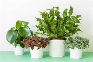 Houseplant, Identification, Tips, U00bb, Caring, For, Houseplants