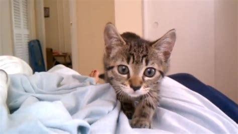 cute kitten sneak attack    weeks top