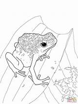 Frog Coloring Dart Poison Frogs Realistic Printable Lizard Animals Tree Rainforest Popular Neck Frilled Supercoloring sketch template