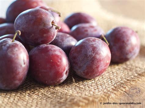 recettes de cuisine simple crumble de prunes rouges jardin des gourmandsjardin des