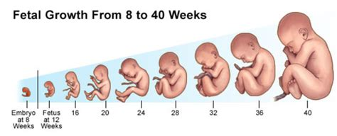 Bb Janin Normal Pregnancy Pesticides Association Of Farmworker