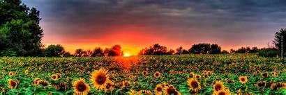 Header Sunflower Sunflowers Field Backgrounds Headers Background