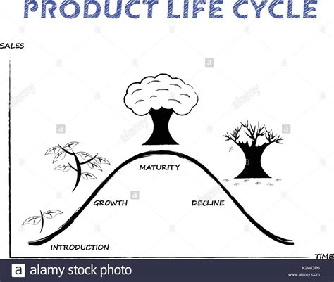 black white product life cycle diagram  drew  pencil
