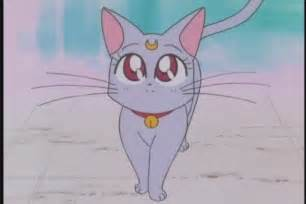 sailor moon cat diana anime sailor moon wiki