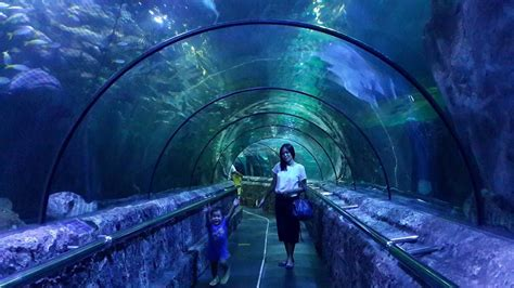wow aquarium raksasa    mall jakarta backpacker
