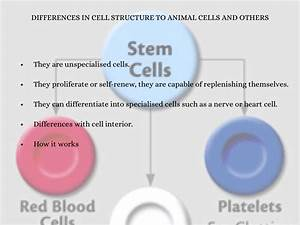 Stem Cell By Jack Burton