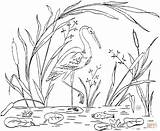 Coloring Stork Storks Library Clipart Line sketch template