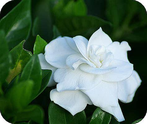 Gardenia Allergy by Maak Uw Eigen Aromatische Tuin Een Tuin Vol Heerlijke Geuren