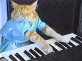 cat keyboard be careful using memes in your ads business insider