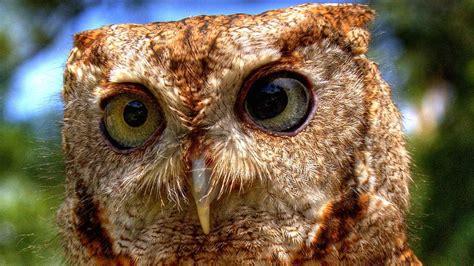 owl  omnivore  herbivore   carnivore