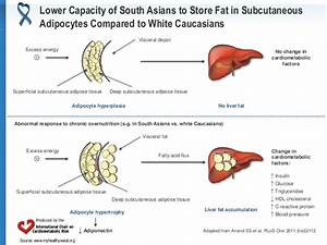 Subcutaneous fat in asians